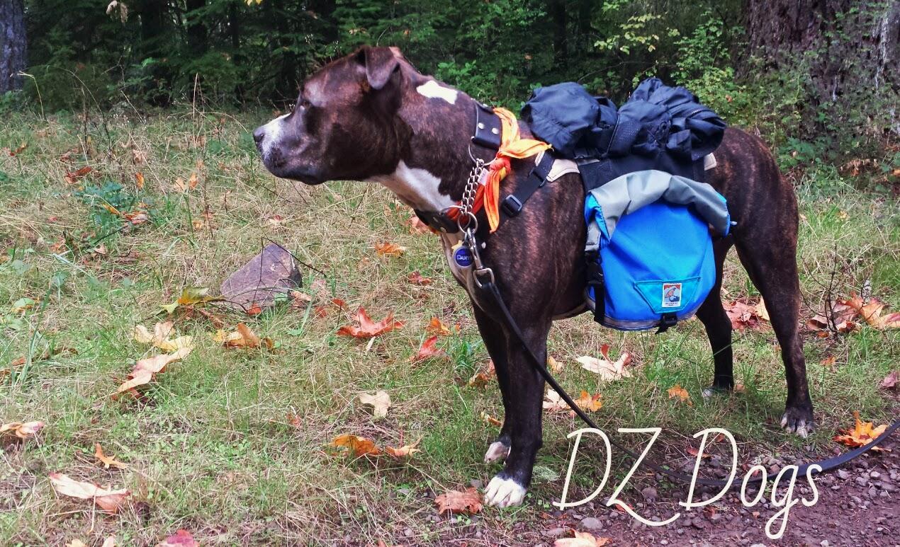 Dz S Adventures Groundbird Gear Dog Backpack