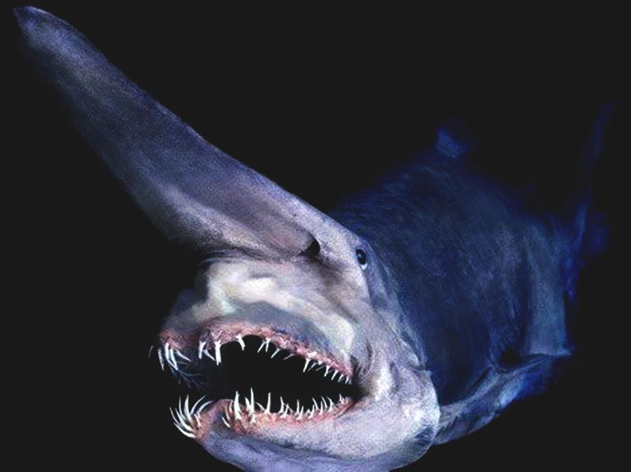 尼斯湖水怪不存在 是格陵蘭鯊魚作怪? @