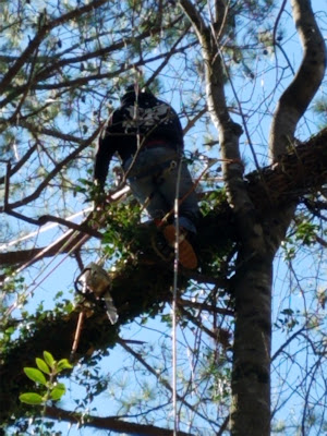 tree removal alpharetta