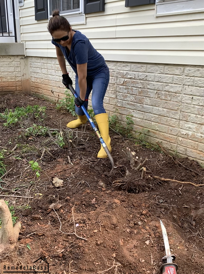 Cristina Garay using a shovel to lift up those pesky roots.
