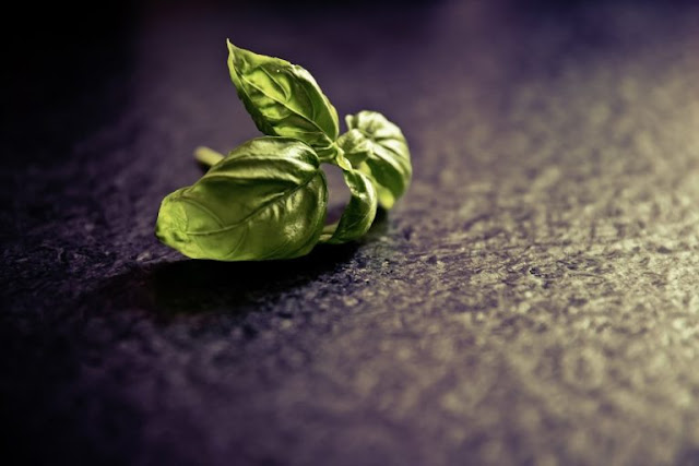 Tulsi/Basil Leaves Benefits for Health, Skin and Hair
