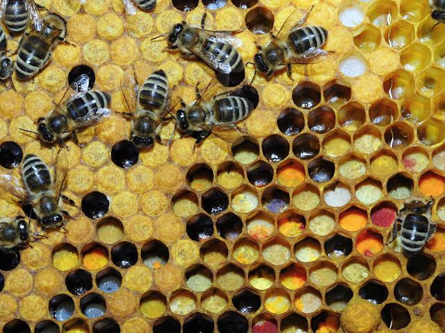 Πόσο σημαντική είναι για τις μέλισσες η σωστή τους διατροφή!!!