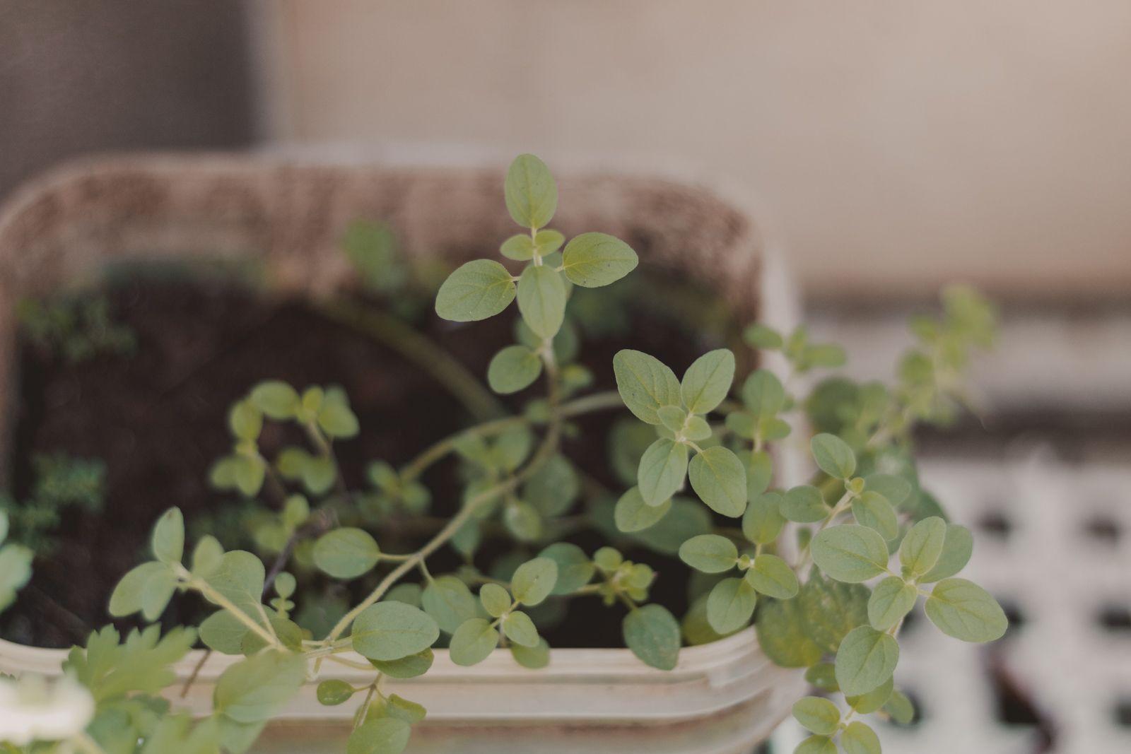 Adoradores de plantas | Houseplant jungle horta em casa