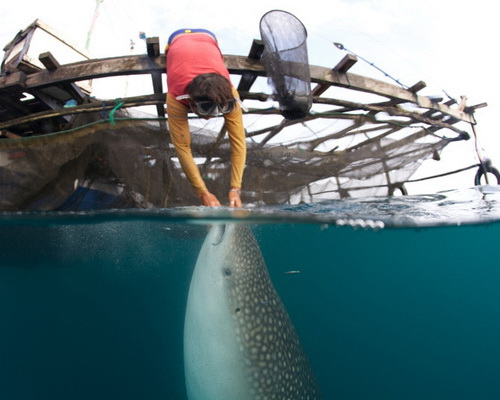 Tinuku.com Teluk Cenderawasih National Park chatting with Whale Sharks and thousands aquatic species on West Papua