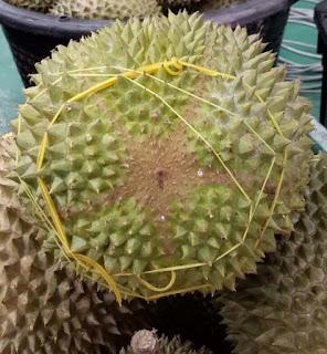 Tips Tahu Durian Musang King Original