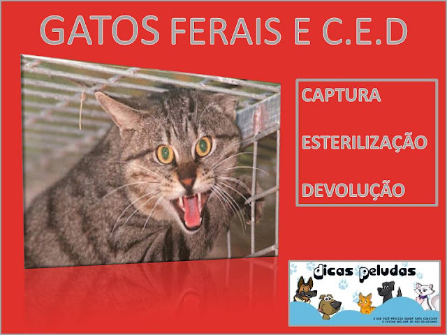 CARTAZ++GATOS+FERAIS.jpg