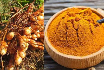 Erode Turmeric Got Geographical Indication Tag