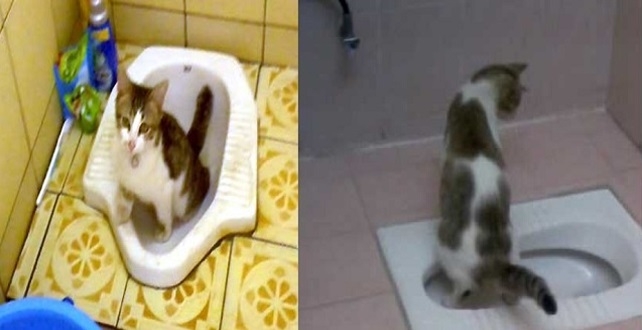 Bau Kencing Kucing Kurang Menyenangkan. Ini Cara Latih Kucing Anda Kencing Di Tandas Yang Sangat MUDAH !!!