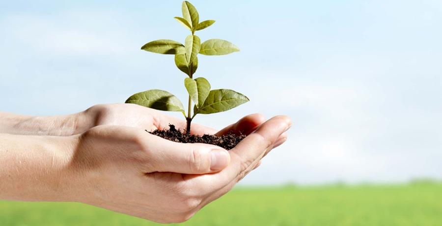 essay lingkungan hidup Cinta tanah air ( tugas essay) -  lingkungan sekolah sekolah sebagai lembaga formal yang pustaka sekolah  artikel lingkungan hidup.