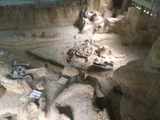 columbian mammoth fossils