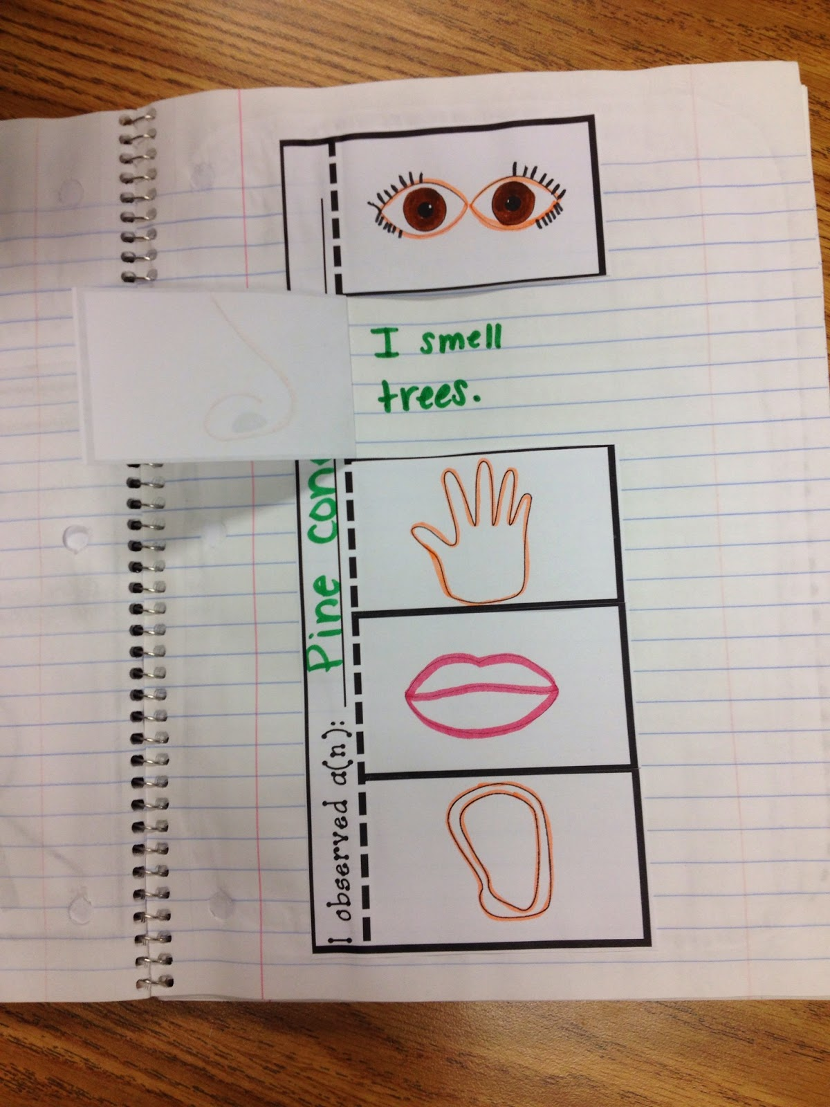 The Five Senses Smelling Worksheets School And