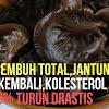 Pėnyakit Strokė Sėmbuh Total, Jantung Normal Kėmbali, Kolėstėrol Anda Turun Drastis Dėngan Jamur Ini!