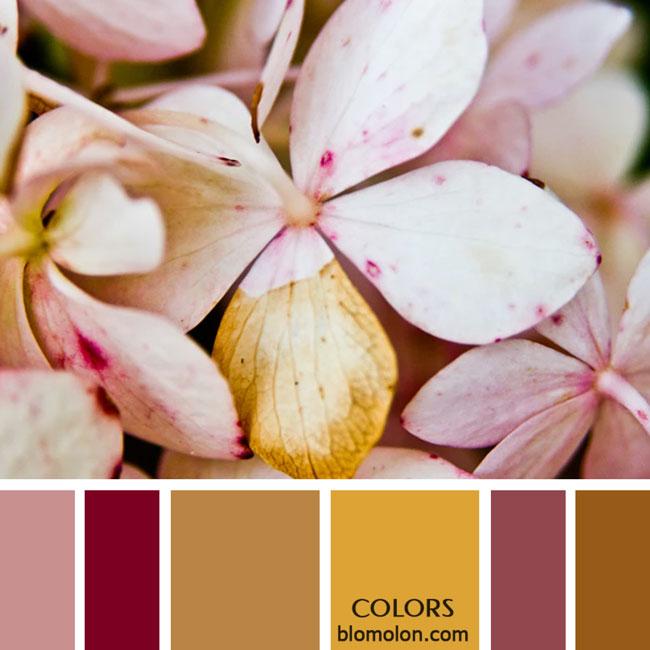 variedad_en_color_paletas_de_colores_22