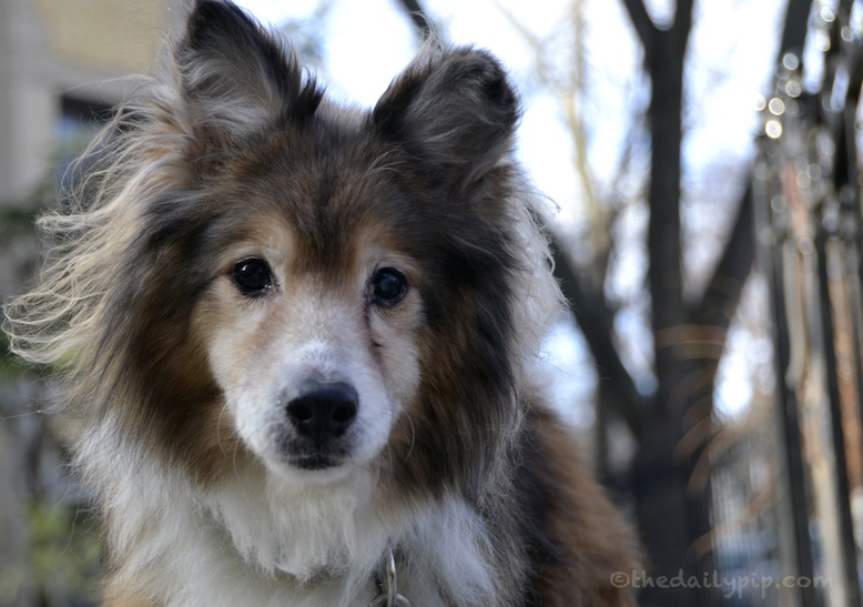 special needs dog adoption adopt don't shop