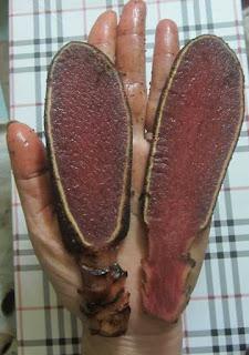 Nấm ngọc cẩu giúp nam giới tăng cường sinh  nlực, phụữ hồi xuân