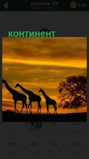 животный мир на континенте в свете заката 470 слов 20 уровень