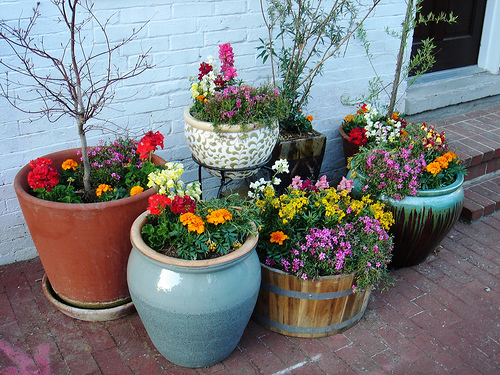 New home designs latest home small potted gardens ideas for Small colourful garden ideas