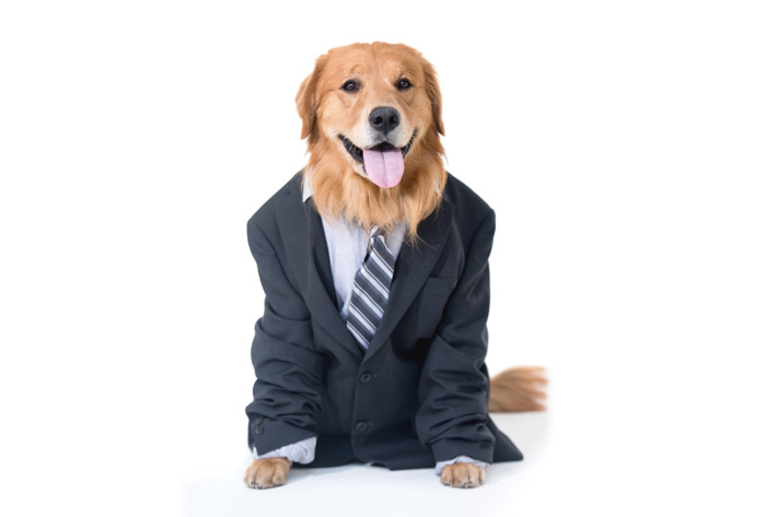 Give Me A Lawyer Dog
