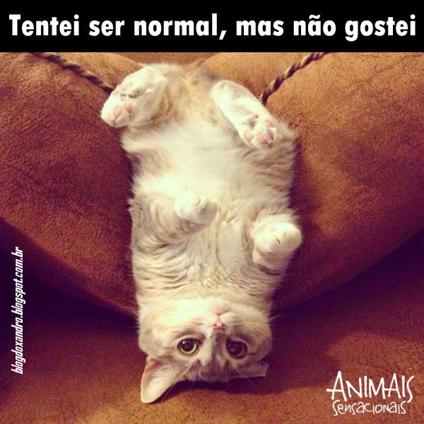 normal.jpg (600×600)