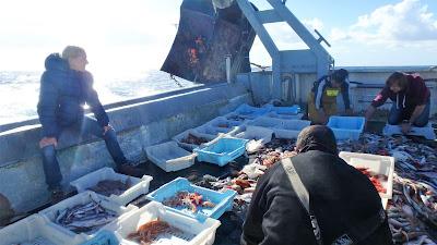 Pescaturismo Mallorca Los turistas son dos miembros más de la tripulación