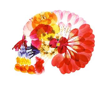 美しいドクロ?美しすぎる押し花アート【a】  アートディレクタ-多田明日香