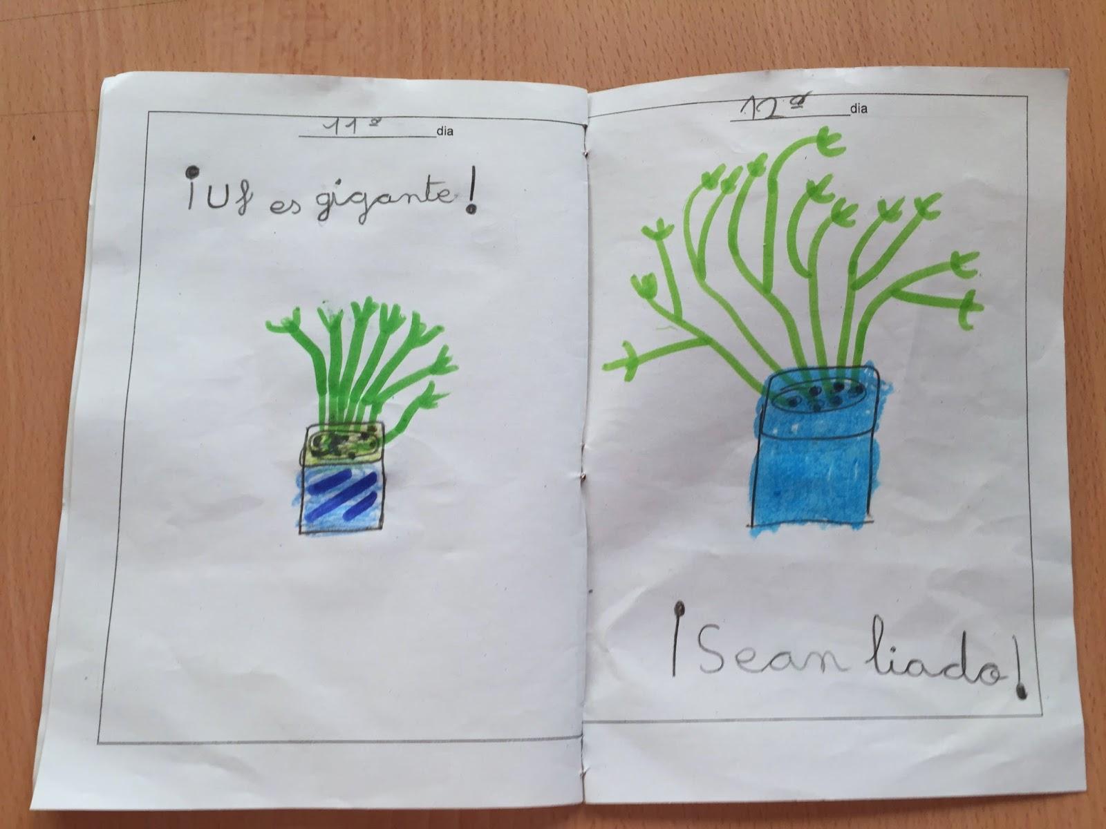 Descubrimos Y Aprendemos Proyecto De Las Plantas