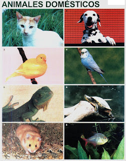 Lamina Animales Domesticos