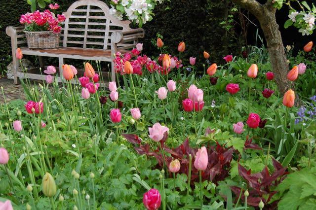 appelbloesem met tulpen, tuinbank