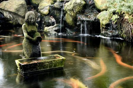 Baladitas con pechan leyenda de la japonesa de la for Tanques para peces