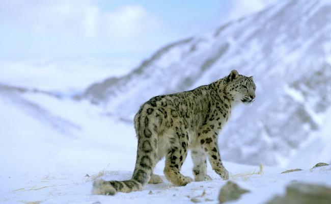 Xvlor.com Sagarmatha National Park is the highest natural conservation on earth