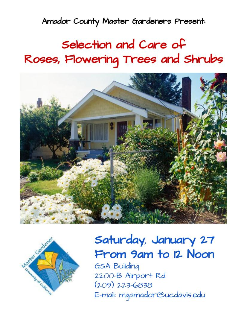 Master Gardeners Present: Selection and Care of Roses, Flowering Trees and Shrubs - Sat Jan 27