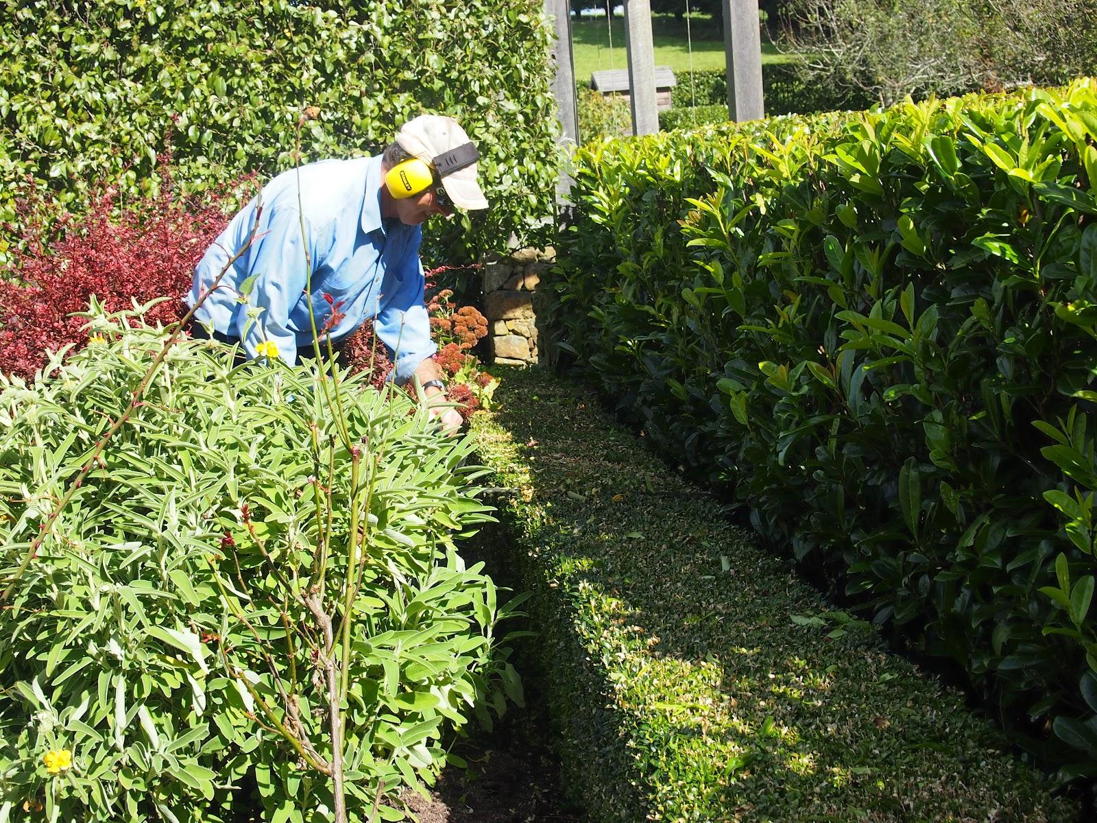 Walk In Garden Box: The Lime Walk: OPEN GARDEN AT THE FARM
