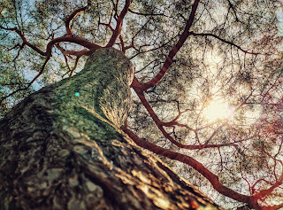 Looking up the trunk of a tree into the branches and the sky beyond. Photo by Edan Cohen.