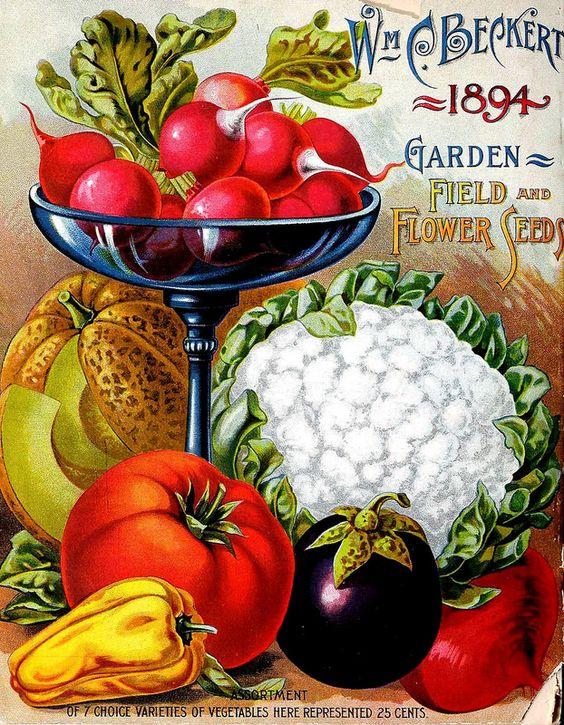 Vintage el glamour de anta o antiguos paquetes de - Semillas de frutas y verduras ...
