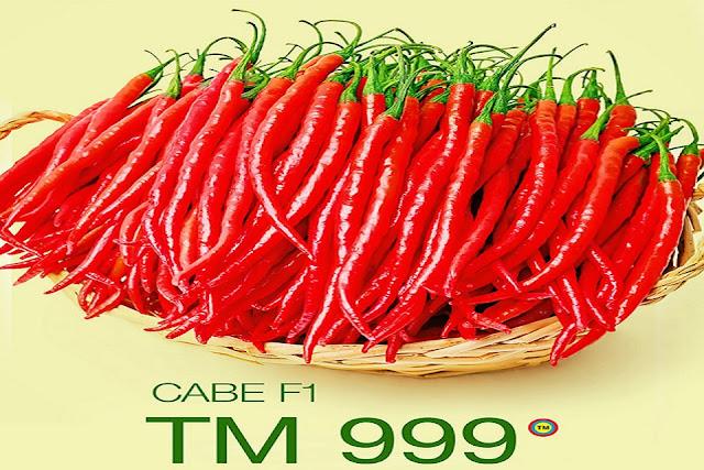 keunggulan tm999