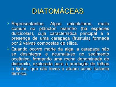 Protoctista 2: Algas