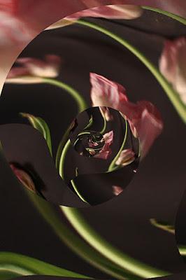http://www.reddancerstudio.com/2016/10/one-image-11-icolorama-edits.html