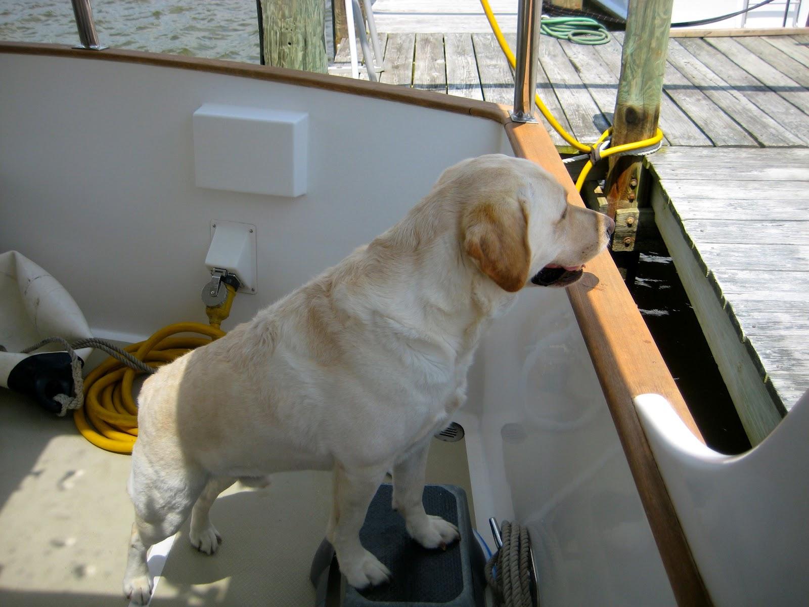 Takingpaws All That Dog Gear