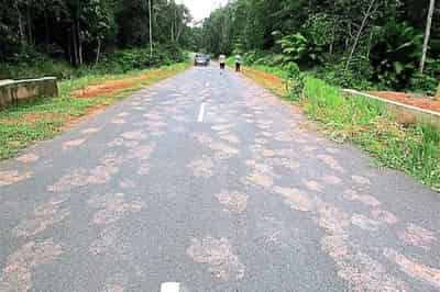 JOHOR AMAZING STORIES : The Sightings Of Bigfoot at Endau Johor