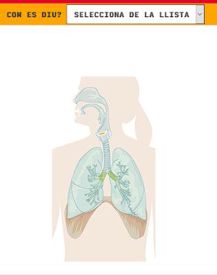 https://cienciasnaturales.didactalia.net/ca/recurs/sistema-respiratori-primaria-/918260d6-d8f7-442e-95ab-e9de0410f2be