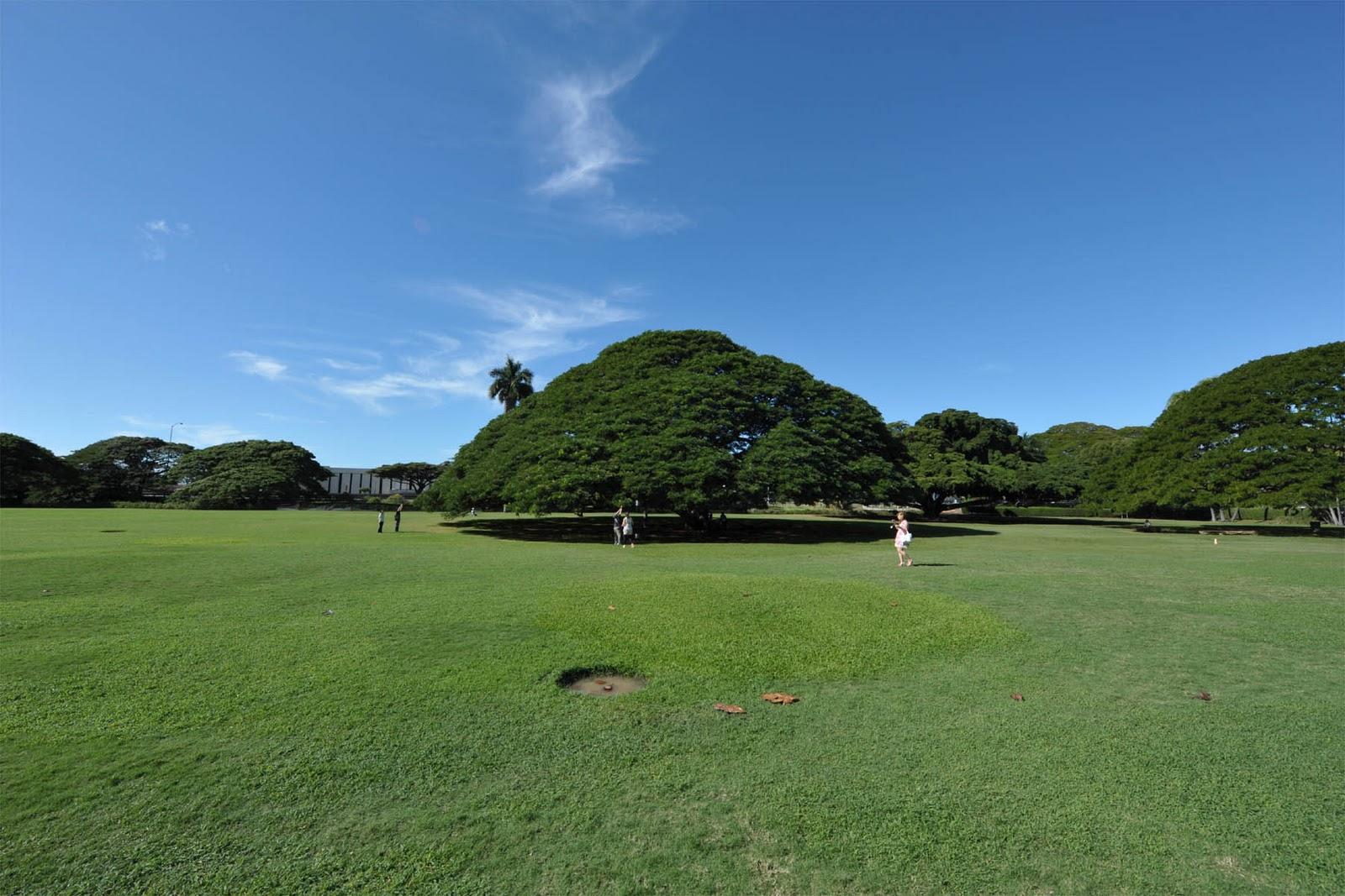 この木なんの木気になる木~♪ハワイで有名なCMの …