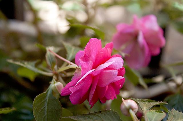 Flor roja de perfil