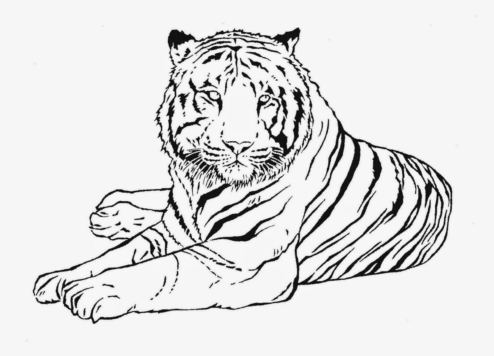 Dibujos De Caras De Tigres Para Colorear: La Chachipedia: Dibujos De Tigres Para Colorear Y Para