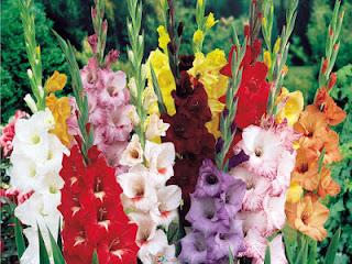 Δείτε σε ποιο λουλούδι ανήκετε σύμφωνα με το μήνα γενεθλίων σας