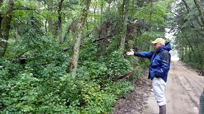 Atlantic White Cedar conservation restoration reforestation New Jersey Pine Barrens ecosystem Wharton