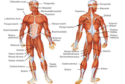 10 Points That Your Muscles Do Not Grow