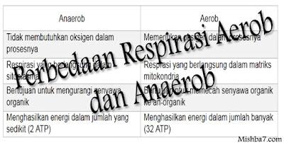 Respirasi Aerob dan Anaerob ( Pengertian Perbedaan )