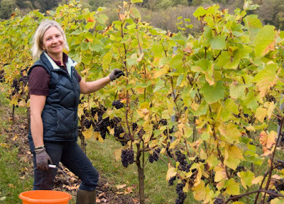 Vineyard Manager Job Search