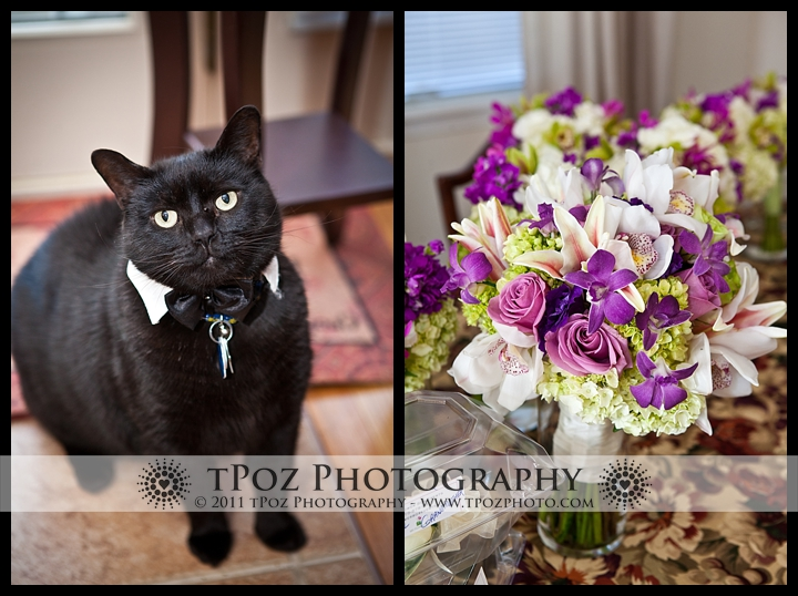 Tuxedo Cat Belvedere Wedding Photos Baltimore