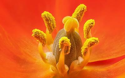 orange-color-beautiful-flower-images